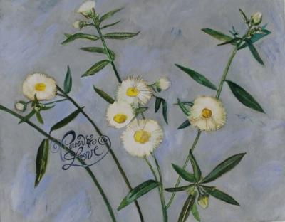 "Power of Love, Volunteer Fleabane Daisy Gouache and Oil on Canvas 16 x 20"" $329.99"